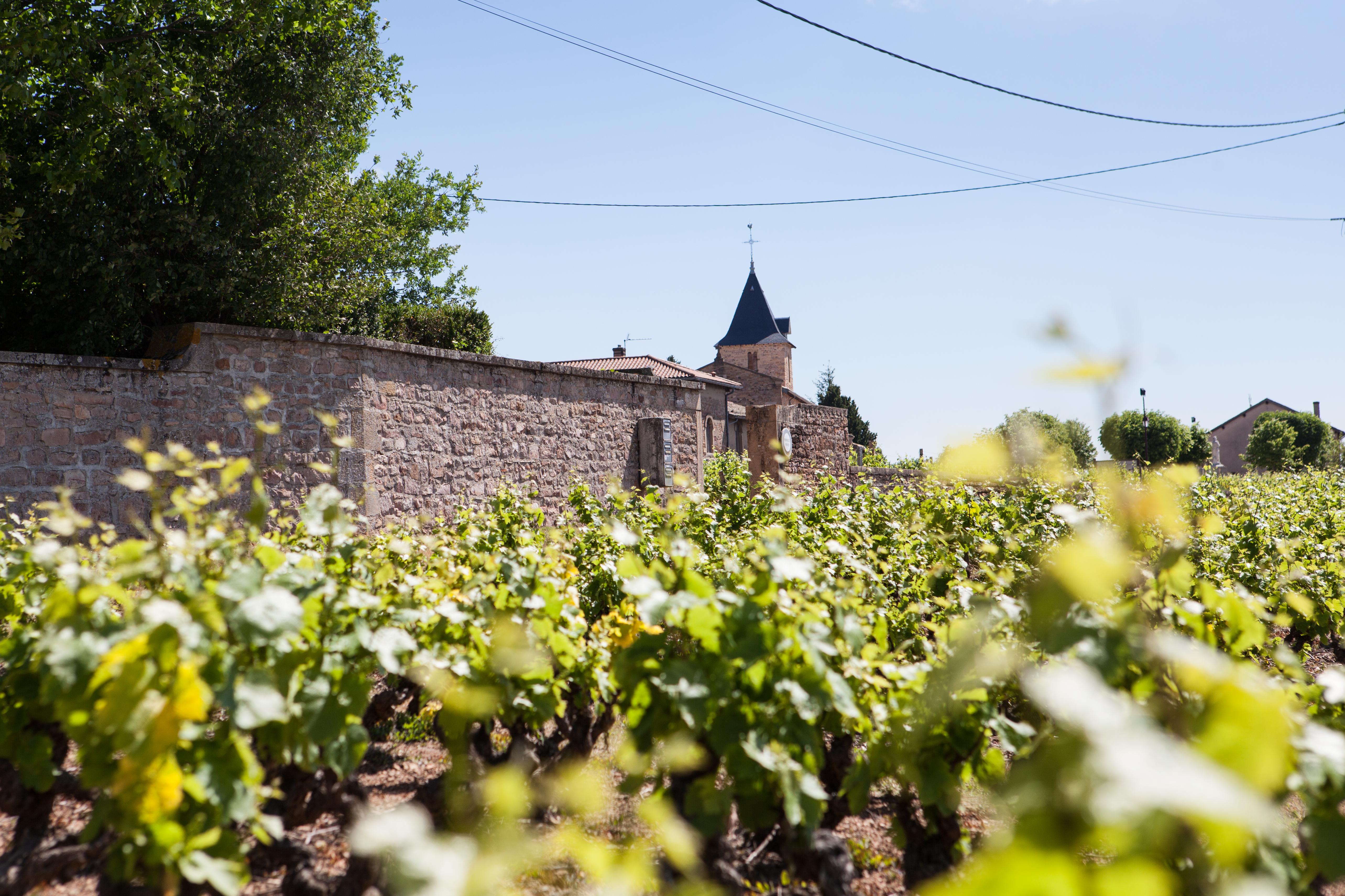 A la belle étoile - Pique-nique dans les vignes de Saint-Amour